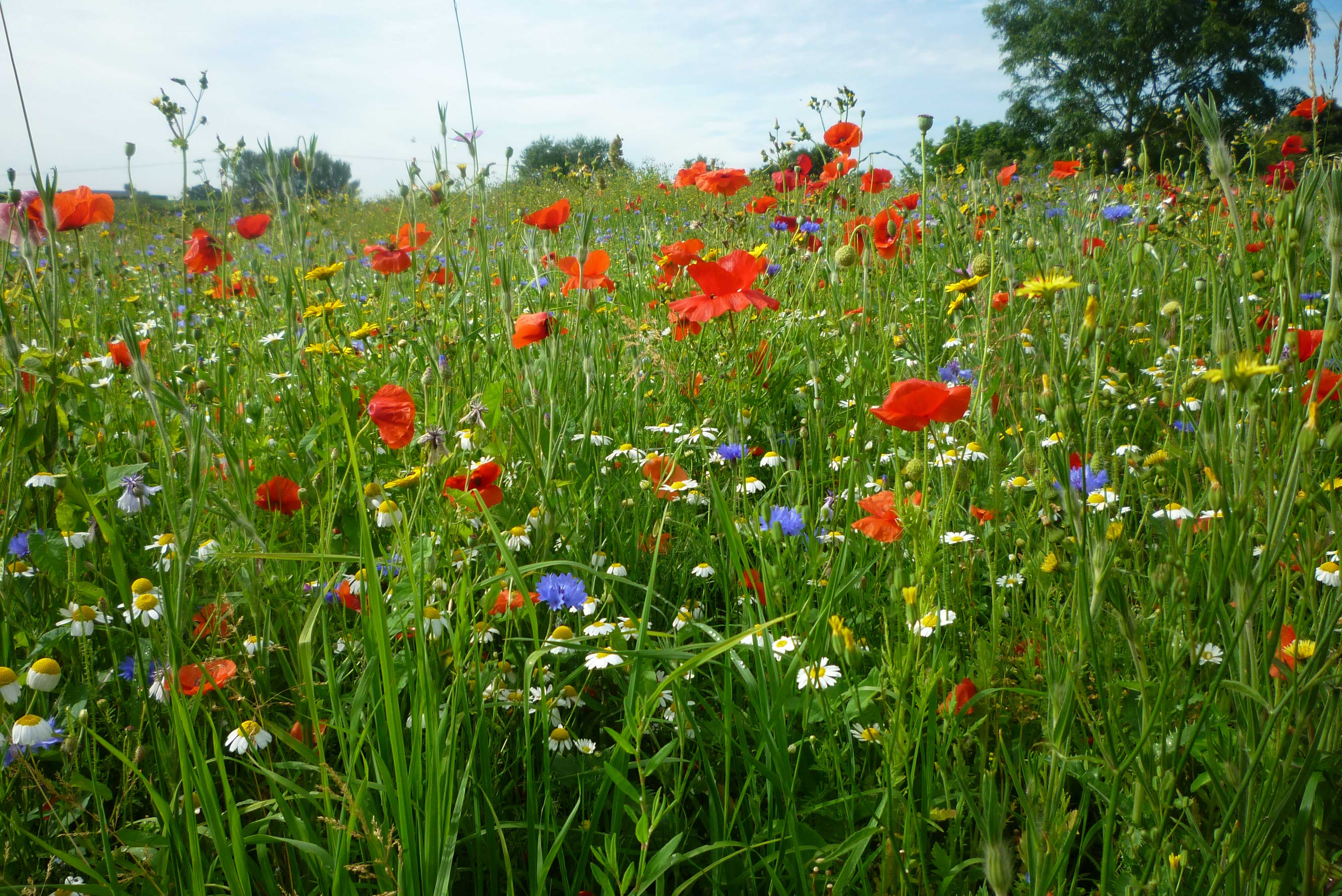 Wildflower Seed Mixtures
